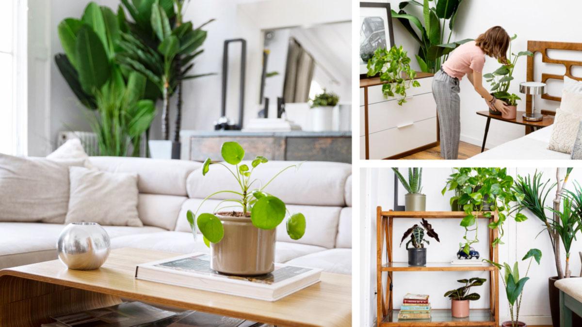 Pianta Da Ufficio Poca Luce cosa hanno bisogno le piante da interni? • green ffink