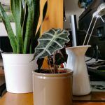 Cosa hanno bisogno le piante da interni?