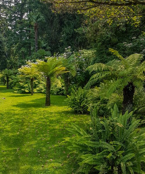 I giardini botanici di Villa Taranto, Dicksonia antarctica