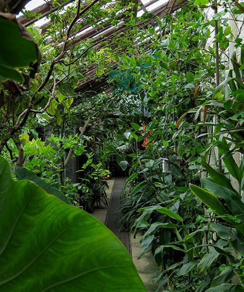 Chelsea Physic Garden, The Tropical Corridor