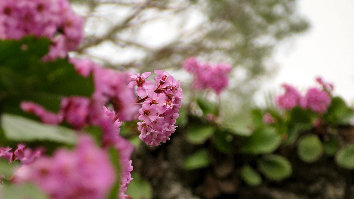 Piante Erbacee Perenni Da Ombra 5 piante compagne dei muri • piante • green ffink