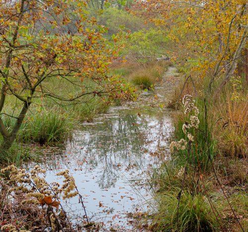 Un fosso che dopo piogge abbondanti si riempie d'acqua