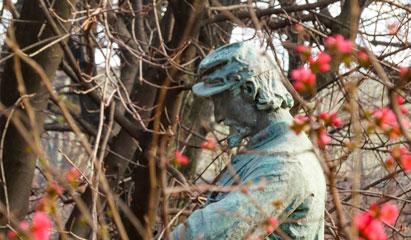 Il Cantastorie nei Giardini Pubblici Indro Montanelli a Milano con i fiori di Chaenomeles.
