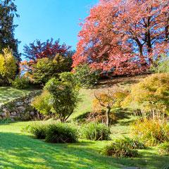 Giardini Botanici di Villa Taranto a Pallanza