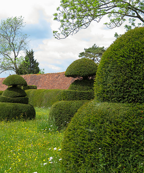 Great Dixter, Topiary Lawn