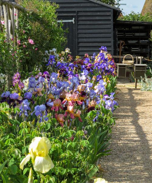 Iris Sissinghurst Castle Garden