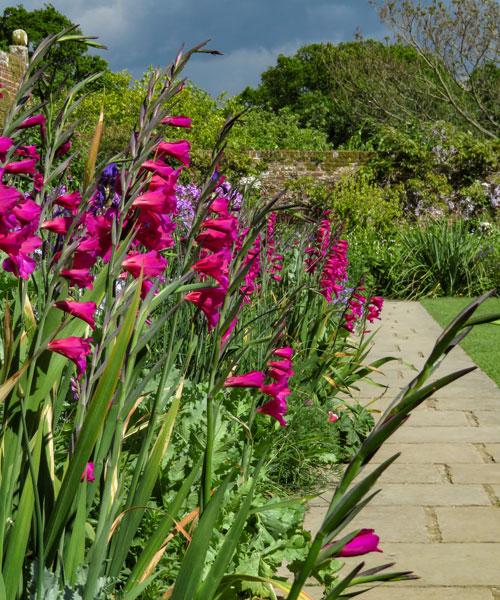 Sissinghurst Castle Garden Purple Border