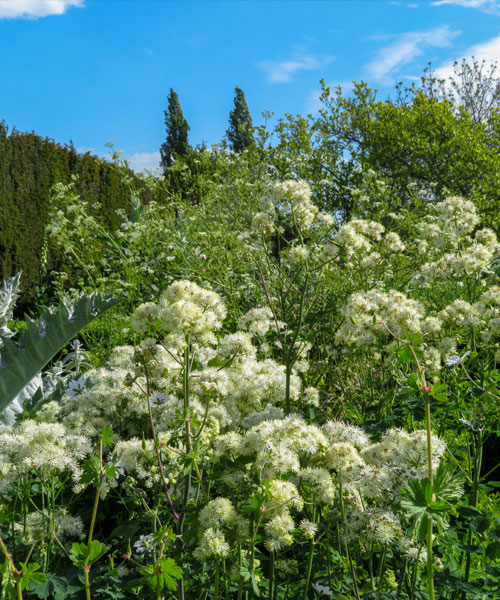 White garden a Sissinghurst Castle Garden
