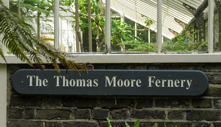 Chelsea Physic Garden, The Cool Fernery