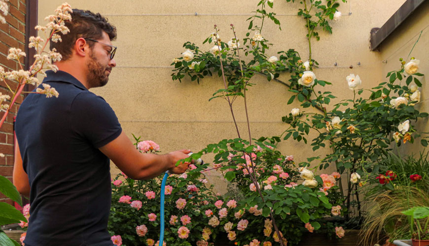 consigli su come irrigare il giardino, balcone e terrazzo in modo sostenibile