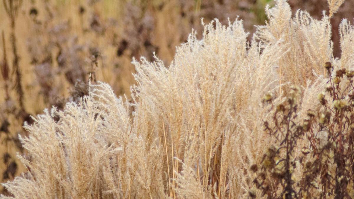 Piante Erbacee Perenni Da Ombra 10 piante dal secco irresistibile: erbacee perenni e le