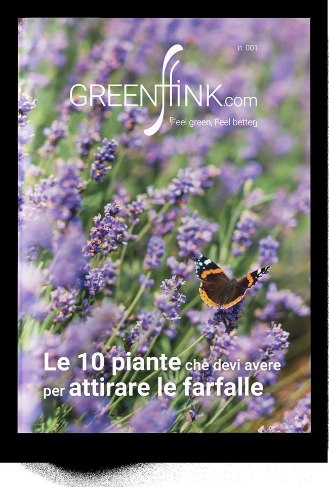 Le 10 piante che devi avere per attirare le farfalle