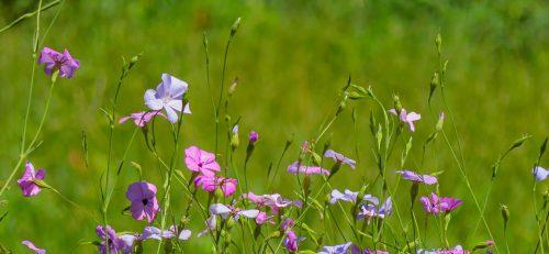 Compo fiorito al Parco Faunistico La Torbiera